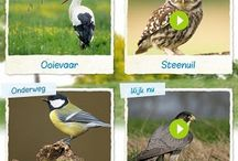 vogels in de kast