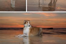 Session inspiration / Places I love to go for pet photography sessions