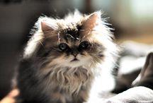 gatos:3