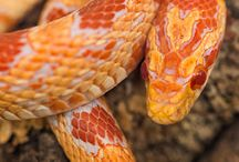 My favorite snake