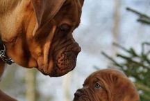Animals ❤️