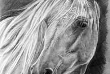 Horse pictures and drawings
