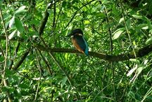 vogel fotografie
