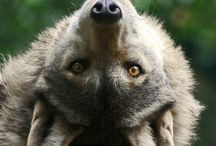Wonderful Wolves / Wolves