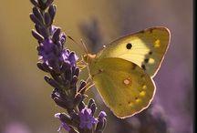 ❀...Purple & Gold