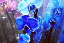 NATURE - Flowers- my photo