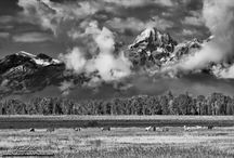 Photography - Black & White / black and white photography with an emphasis on nature photos