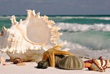 Shelf Life! / Beautiful shells on the seashore, a wonderful reward after a walk to explore! / by Catherine Seiler