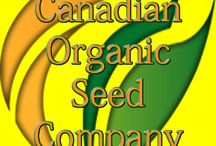 Rare culinary seeds / Culinary seeds include wildcrafted and farm grown/hard to find seeds.