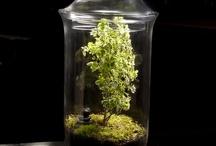las domowy