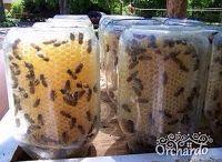 Ферма Пчеловодство