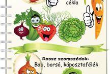 kerti növény, zöldség, veteményes