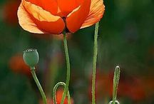 Kwiaty w malardtwie / kwiaty, ogrody
