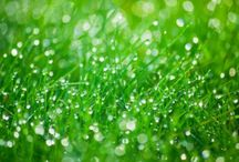 Il Mio Giardino - Italia / Condividete le foto dei vostri giardini! / by Biogiardino