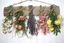 dried flowrs