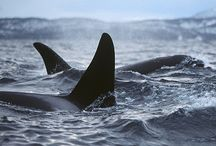 whales and dolphins / by vickie williamson