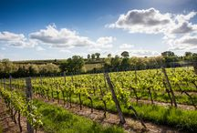 Vineyards / Vignobles / by Bordeaux Tourisme