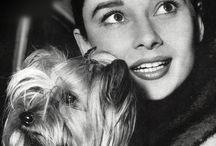Audrey Hepburn & Dogs