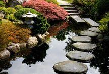 Víz a kertben / Víz a kertben