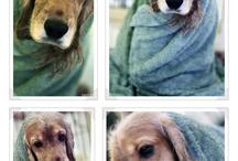 My Doggies