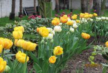 My Garden - Miłkowo / mój ogród w wielu odsłonach