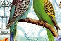 #Попугаи#КешаиАйша