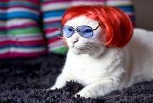 Humourous Anthropomorphized Felines / #cute #cats