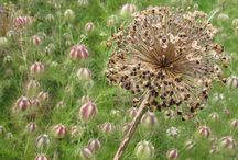 Flowers | Brown / Flowers | Brown