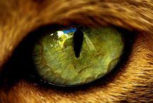 Oči, Eyes
