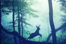 festészet II. animals