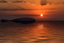 Loucos por Pôr do Sol