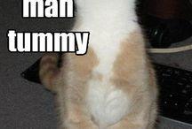 cute littltle cat / by KarenFaye Dobies
