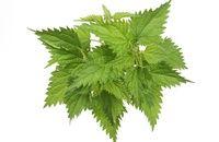 spring herbs