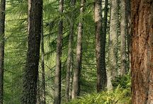 Bosque / El bosque Michoacano