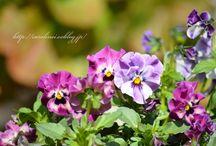 Flowers / by elza_kun