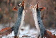 ANIMALS     Art\Photography