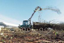 Bäume schlachten in Oldenburg