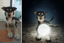 Surreal Pets / Sarolta Ban, a talented Hungarian photographer (whom we've written about before) is back with more beautiful surreal images of loving shelter dogs looking for a home.