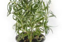 hierbas aromaticas en casa