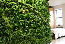 Oxygen Walls / Plant walls for the office