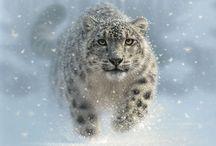 snow ❄ leopard