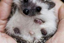 So much cute