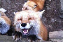 d e r F u c h s / All. Fox. Everything. / by Joanna Matthy