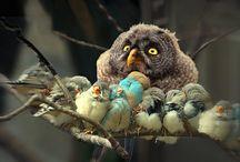 Birds / by Julie McDonald