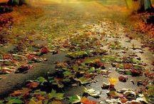 Herfst / Najaar