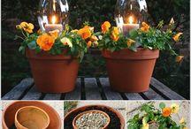 Växter/trädgård