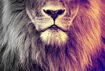 Lion loveeeeeeeee <33