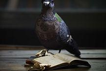 Птицы интерьрные