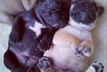 Doggy / Cute puppies / by Mary Celie