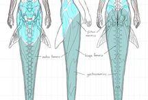 фентезийная анатомия